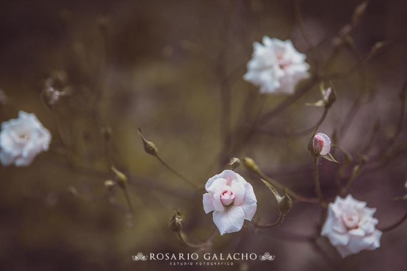 FOTOGRAFO DE BODAS MALAGA-86-2
